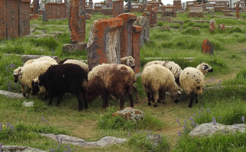 Virtuelles Hausrecht - Schwarze Schafe müssen draußen bleiben